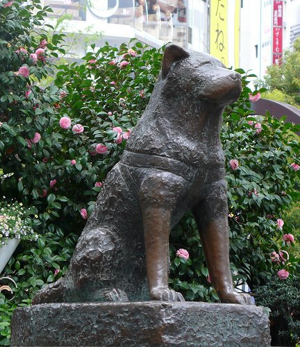 Hachiko calmly watching the crowds passing by